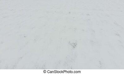 Top view of a plowed field in winter. A field of wheat in...