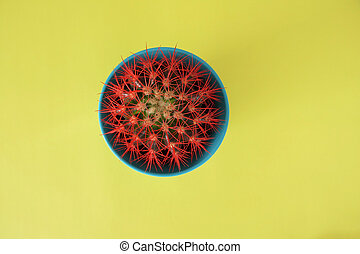 Top View of a Red Cactus in a Blue Flower Pot isolated on Yellow Background