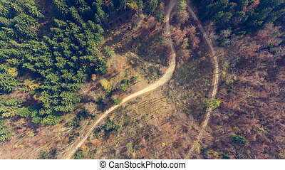 Top view of a road through forest.