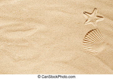 Top view of a sandy beach, texture of clean sand of a natural surface. Sand background. Imprints of mollusks in the sand.