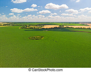 Top view of agricultural fields in Russia in July - top view...