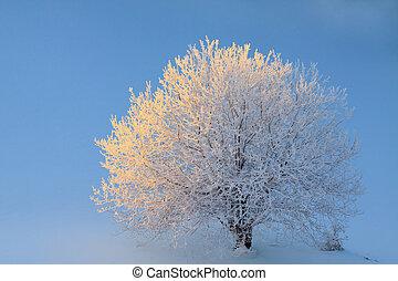 Top view of alone frozen tree on winter field.