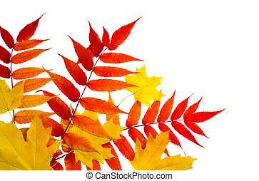 Top view of autumn leaves isolated on white background
