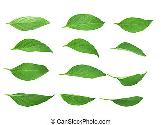 Top view of Basil leaves isolated on white background.