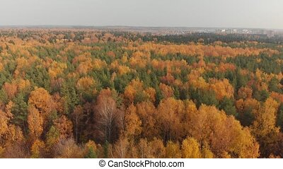 top view of beautiful autumn forest with deciduous and...