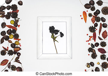 black rowan berries in frame