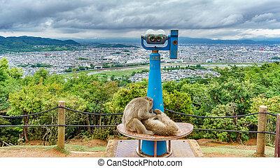 Kyoto from Arashiyama mountain with monkeys