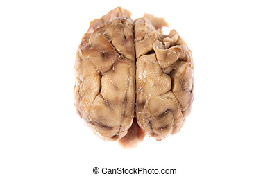 Top view of brain over white background