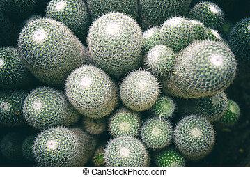 Top view of cactus in the garden