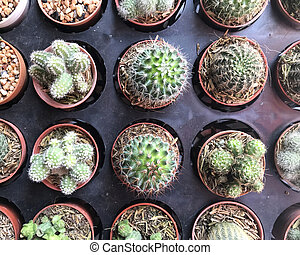 Top view of cactus tree background