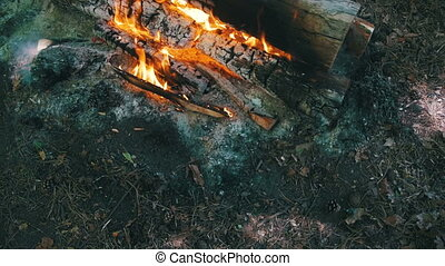 Top View of Campfire of the Branches Burn in the Forest. Slow Motion