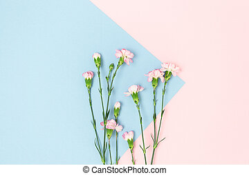 Top view of carnation flowers on a pink and blue pastel background.