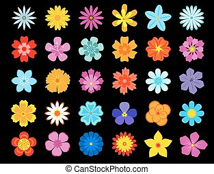 Top view of colorful blooming flowers