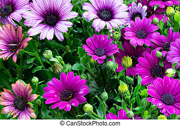 Top view of colorful daisy flowers
