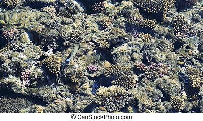top view of coral reef with fish. coral reef in the red sea texture. feeding the fish in the red sea