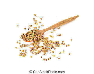 Top view of coriander seeds in wood spoon on white background