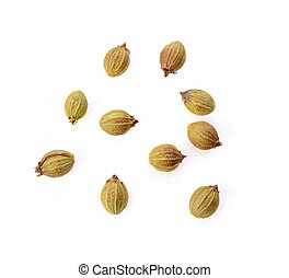 Top view of coriander seeds on white background