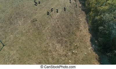 Top View of Cows on a Farm in Rural Area in Sao Paulo,...