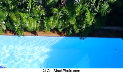 top view of crystal clean water surface in swimming pool and palm trees, sun shine bright water-pool loop background. 3840x2160