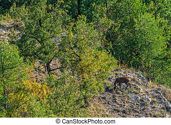 Top view of deer feeding in the clearing