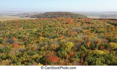 Top view of foliage tree forest during autumn - Top view of...
