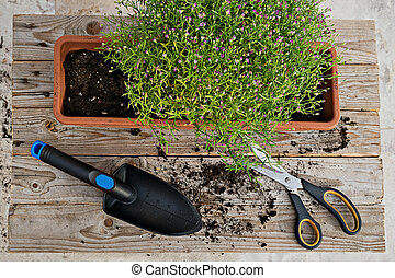 Top view of gardening toold abd plant