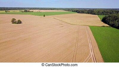 Top view of grain fields