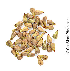 Top view of grape Seed isolated on white background