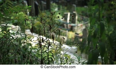 Top view of graveyard with crosses and headstones surrounded...
