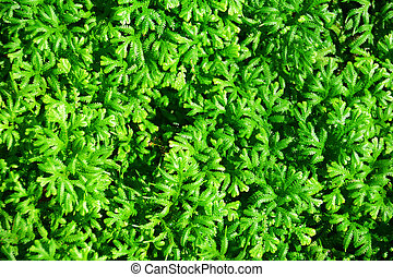 Top View of Green Background