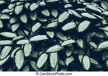 Top view of green leaves plant background and pattern.