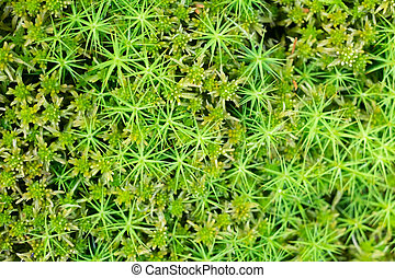 Top view of green wet moss on a swamp
