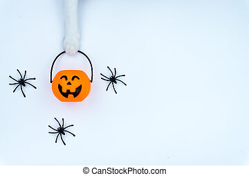 Top view of Halloween decoration, A hand of cat holding jack o lantern and spider on white background with copy space for text. halloween concept.