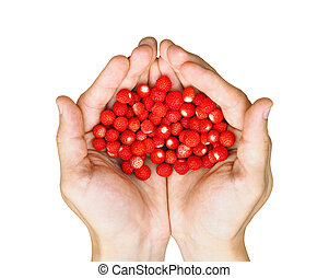 Top view of hands holding wild strawberries