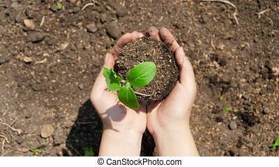 Top view of holding fresh green plant sprout in hands and lifting it up