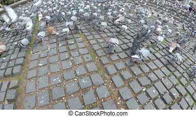 Top view of Huge Flock of Pigeons in the City Street. The...