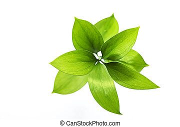 green leafs - Top view of isolated green leafs