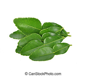 Top view of Kaffir lime leaf isolated on white background