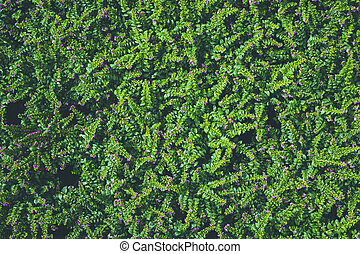 Top view of leaf small plant in garden