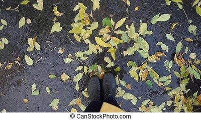 Top view of legs stand in puddle among yellow leaves - Top...