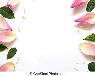Top view of lotus petals with green leaves and yellow pollen on white background