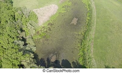 Top view of marsh with green vegetation and water surface in...