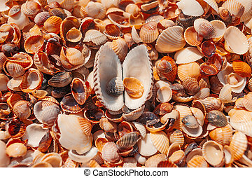 Top view of open seashell on the beach - Top view of...
