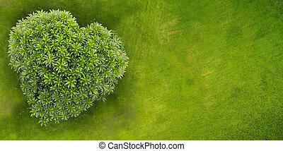 Top view of park with tree in the shape of heart