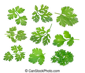 Top view of parsley isolated on white background.