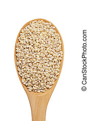 peeled pearl barley grain in wooden spoon isolated on white background