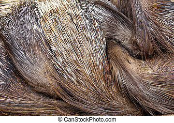 Top view of porcupine sleeping