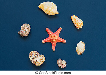 top view of Sea shells and starfish on navy blue background. summer holiday and vacation concept