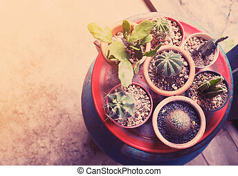 Top view of small cactus pot collection
