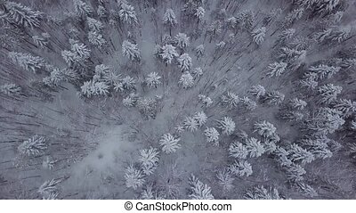 Top view of snowy trees in forest - From above aerial view...